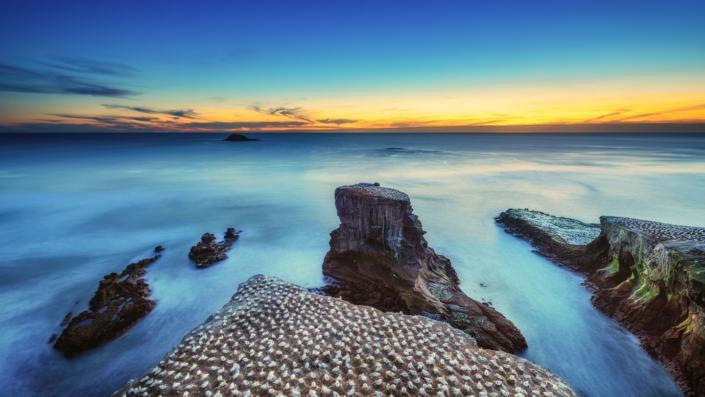 Gannet Colony - Muriwai Beach Auckland